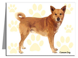 Canaan Dog Note Cards
