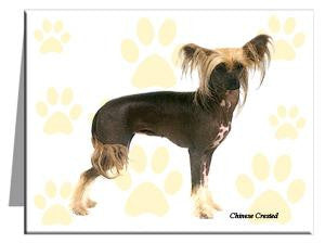 Chinese Crested Note Cards