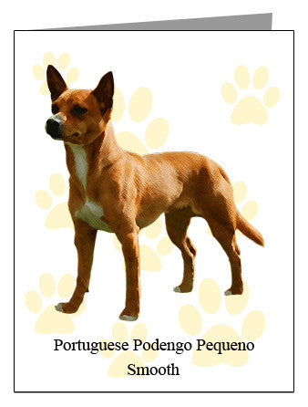 Portuguese Podengo Pequeno Smooth Note Cards