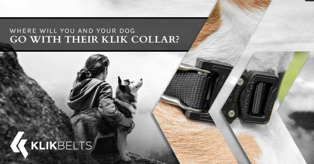 Where Will You And Your Dog Go With Their Klik Collar?