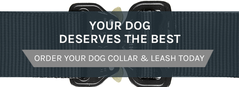 Order Your Dog Collar & Leash Today!
