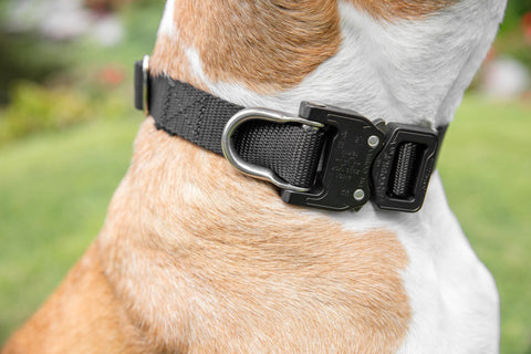 *NEW* Klik Collar Medium - Klik Belts Tactical Nylon Cobra Belt