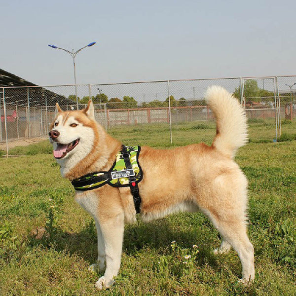 dog lead dog harness