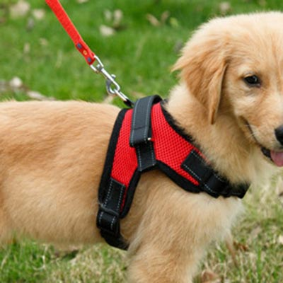 Dog Harnesses, Collars and Leashes