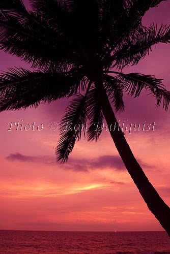 Silhouette of palm tree at sunset. Maui, Hawaii Picture Photo