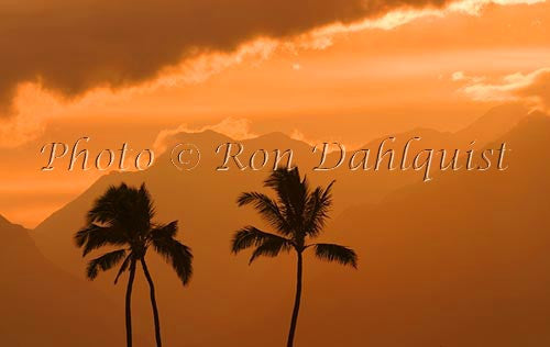 Silhouette of palm trees at sunset, Maui, Hawaii