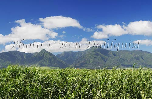 Cane fields and West Maui Mountains, Central Maui, Hawaii - Hawaiipictures.com