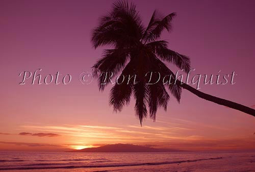 Silhouette of palm tree at sunset with Island of Lanai in distance. Maui, Hawaii
