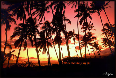 Hawaiian Lahaina Sunset with Palm trees Maui-Hawaiipictures.com