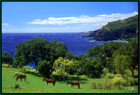 Road to Hana Horses in pasture Maui-Hawaiipictures.com