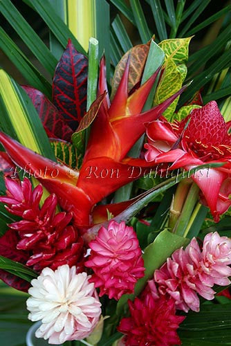 Tropical Flowers - Gingers and Heliconias, Hana, Maui, Hawaii