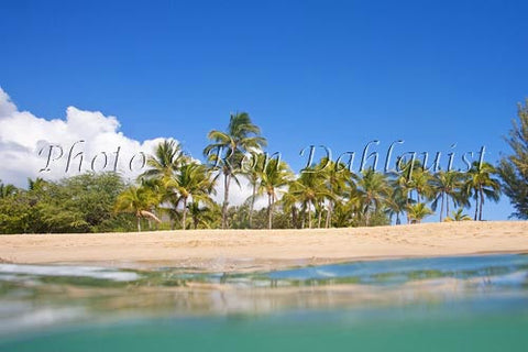 Palm trees, sand and ocean at Manele Bay and Hulopoe Beach, Lanai, Hawaii Picture Photo