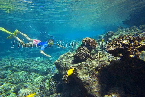 Snorkeling at Ahihi Kinau Natural Area Reserve, Maui, Hawaii Picture - Hawaiipictures.com