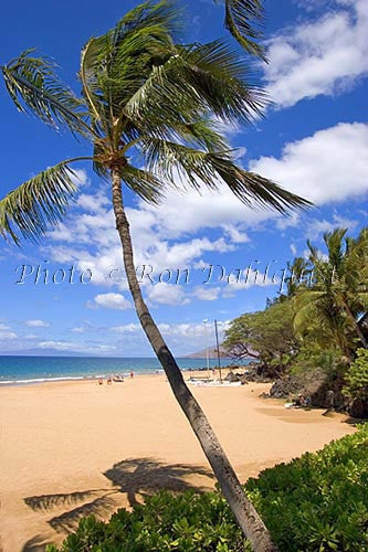 Kamaole Beach and palm tree, Kihei, Maui, Hawaii