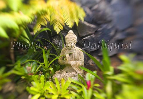 Budhist statue in water garden with Bromeliads, Maui - Hawaiipictures.com