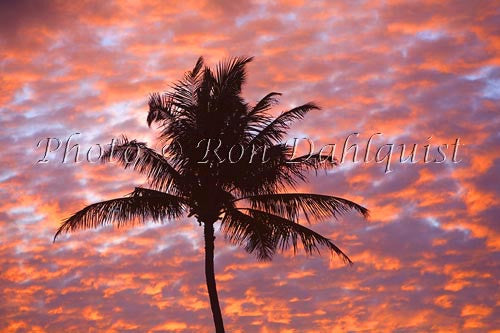 Silhouette of palm tree against colorful sunset, Maui, Hawaii