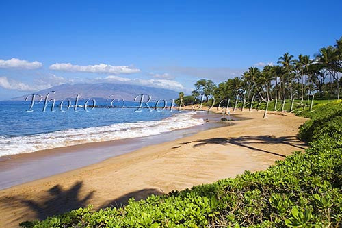 Ulua Beach and palm trees, Wailea, Maui, Hawaii Picture