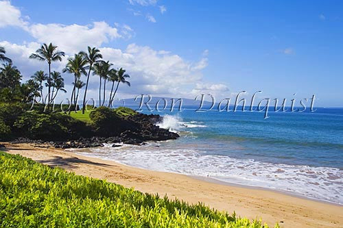Ulua Beach and palm trees, Wailea, Maui, Hawaii Picture Photo