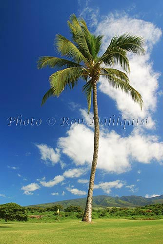 Kaanapali Golf Course, Maui, Hawaii Picture Photo Stock Photo