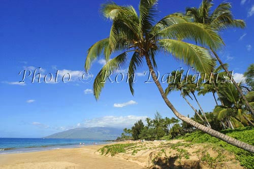 Kamaole beach and palm trees, Kihei, Maui, Hawaii Picture Photo