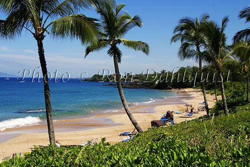 Kamaole beach and palm trees, Kihei, Maui, Hawaii Picture