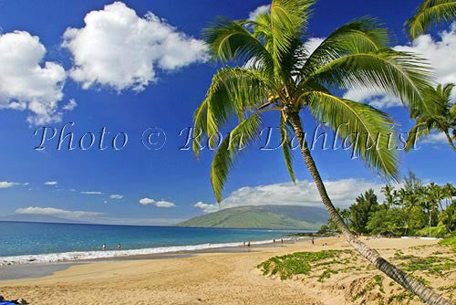 Kamaole beach and palm trees, Kihei, Maui, Hawaii