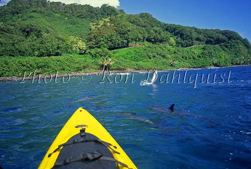 Kayaking with spinner dolphins, Hanamanu, Maui, Hawaii Picture - Hawaiipictures.com