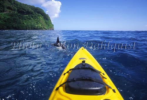 Kayaking with spinner dolphins, Hanamanu, Maui, Hawaii