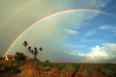 Picture Of Rainbow Over Kauai