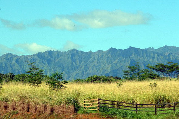 Mountains Of Kauai Picture