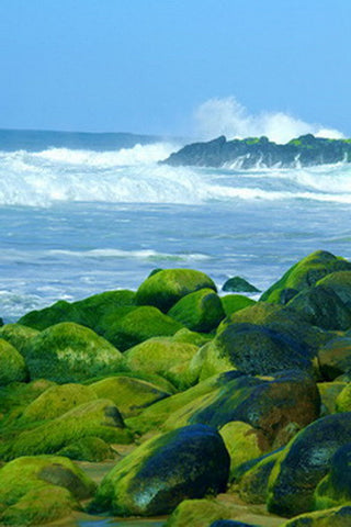 Picture Of Rocky Beach Covered In Algae