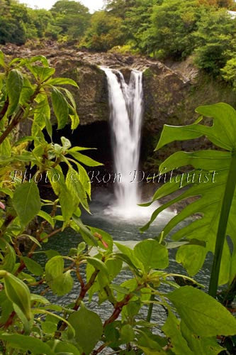 Rainbow Falls, Hilo, Big Island of Hawaii Picture Photo