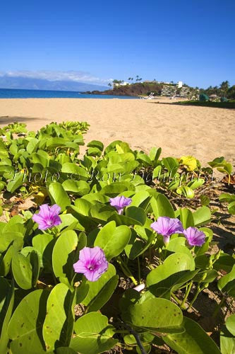 Kaanapali Beach and Black Rock, Maui, Hawaii Picture
