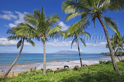 Palm trees and Wailea Beach, Maui, Hawaii