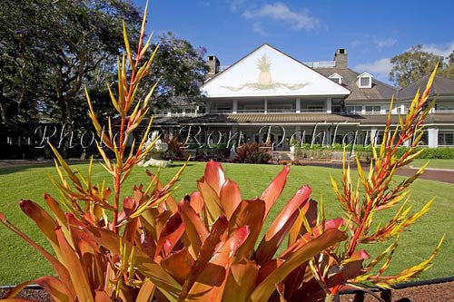 Koele Lodge framed by Bromeliad, Lanai City, Lanai - Hawaiipictures.com