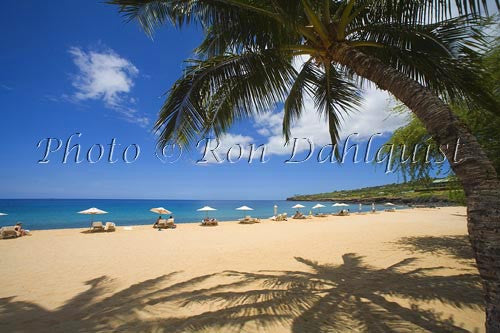 Palm trees on beautiful Hulopoe Beach at Manele Bay, Lanai, Hawaii