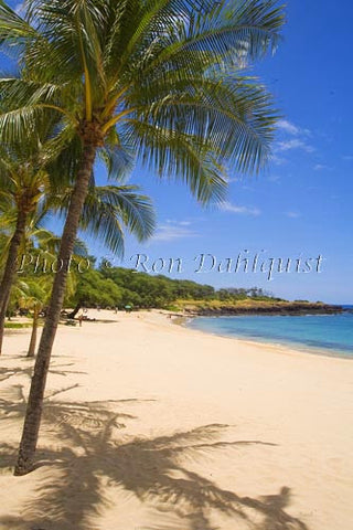 Palm trees on beautiful Hulopoe Beach at Manele Bay, Lanai, Hawaii Picture - Hawaiipictures.com