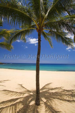 Palm trees on beautiful Hulopoe Beach at Manele Bay, Lanai, Hawaii Photo