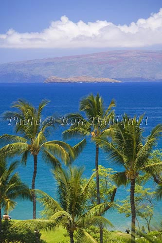 Palm trees frame view of Molokaini and Kahoolawe, Wailea, Maui, Hawaii Picture