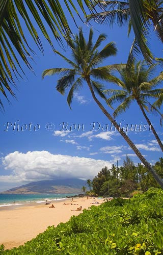 Palm tree and Kamaole Beach, Maui, Hawaii