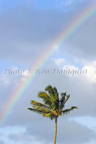 Rainbow and palm tree. Maui, Hawaii