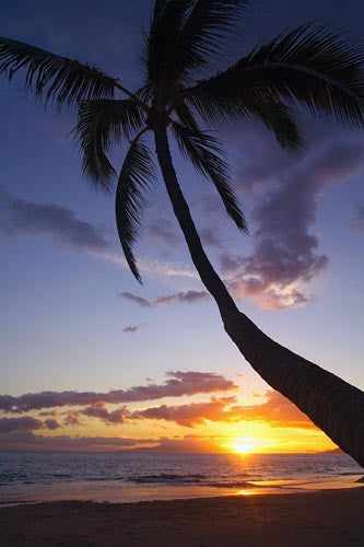 Palm tree at sunset, Kamaole Beach One, Kihei, Maui, Hawaii