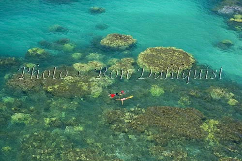 Snorkelers exploring the beautiful coral near Olowalu, Maui, Hawaii