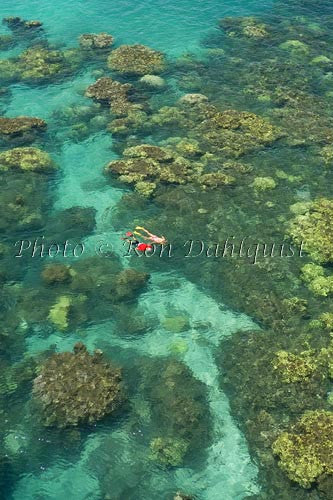Snorkelers exploring the beautiful coral near Olowalu, Maui, Hawaii Picture