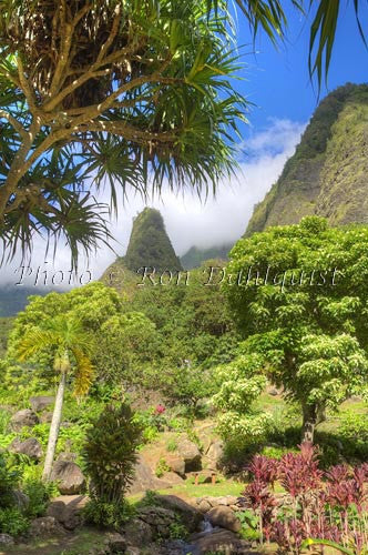 Iao Needle at Iao Valley State Park, Maui, Hawaii Picture Photo Print