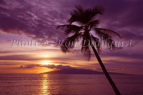 Palms at sunset from Lahaina, Maui. Lanai in distance