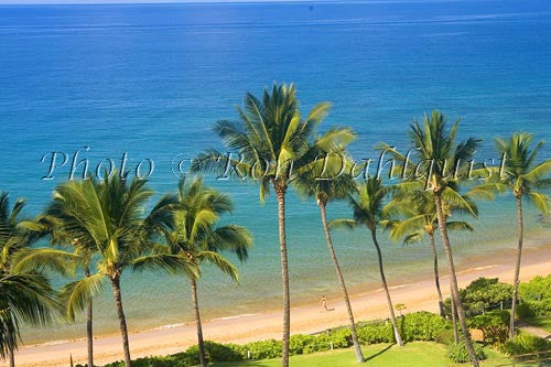 Palm lined, Mokapu Beach, Wailea, Maui, Hawaii