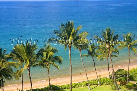 Palm lined, Mokapu Beach, Wailea, Maui, Hawaii - Hawaiipictures.com