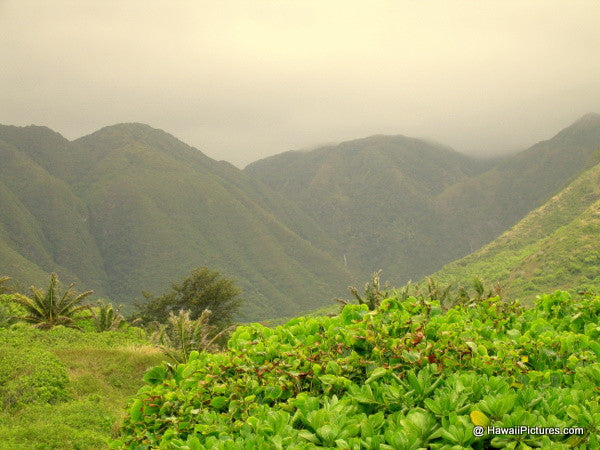 Halawa Valley Picture - Hawaiipictures.com