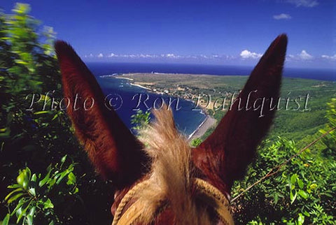 View from atop a mule of Kalaupapa, Molokai, Hawaii